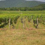 Закон о землях сельхозназначения
