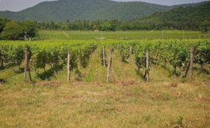 Органический закон «О собственности на землю сельскохозяйственного назначения»